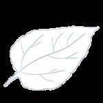 Umwelt_Blatt